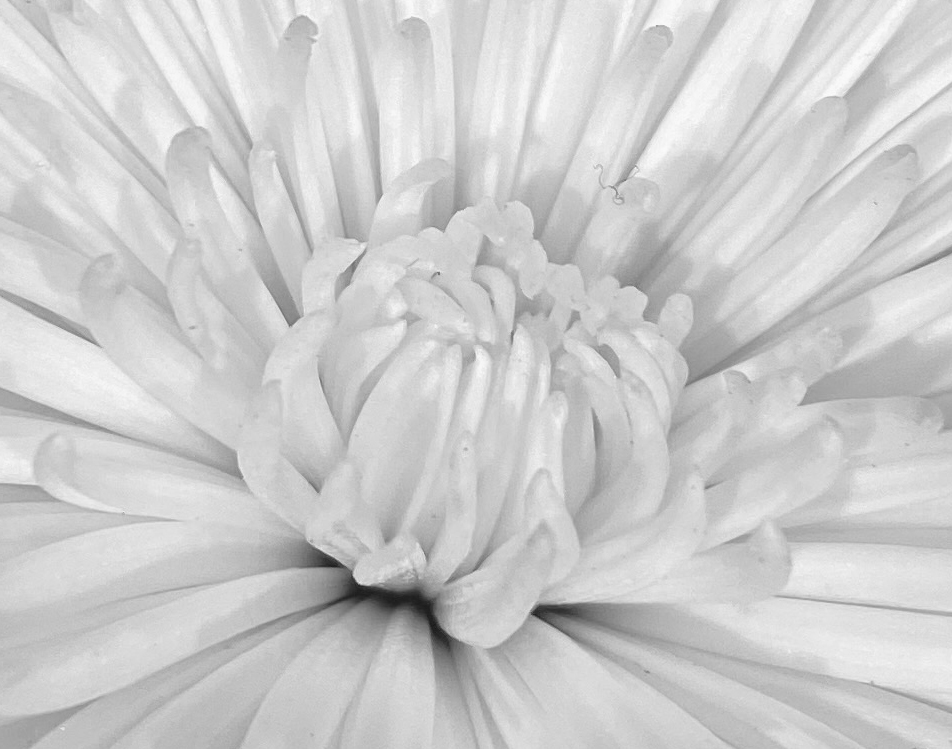 Bouquet 1 bw