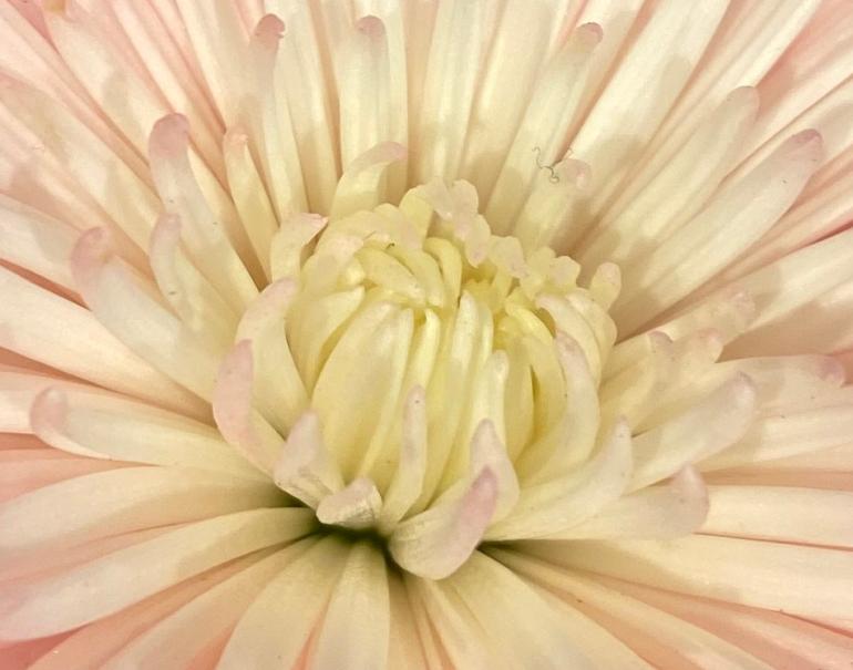 Bouquet 1 zooooom