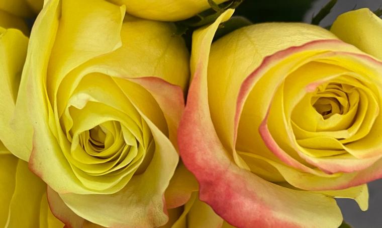 Bouquet 3_26_1 FAD