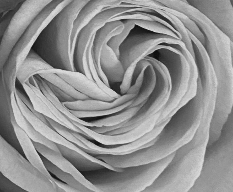 Bouquet 3_26_2 bw