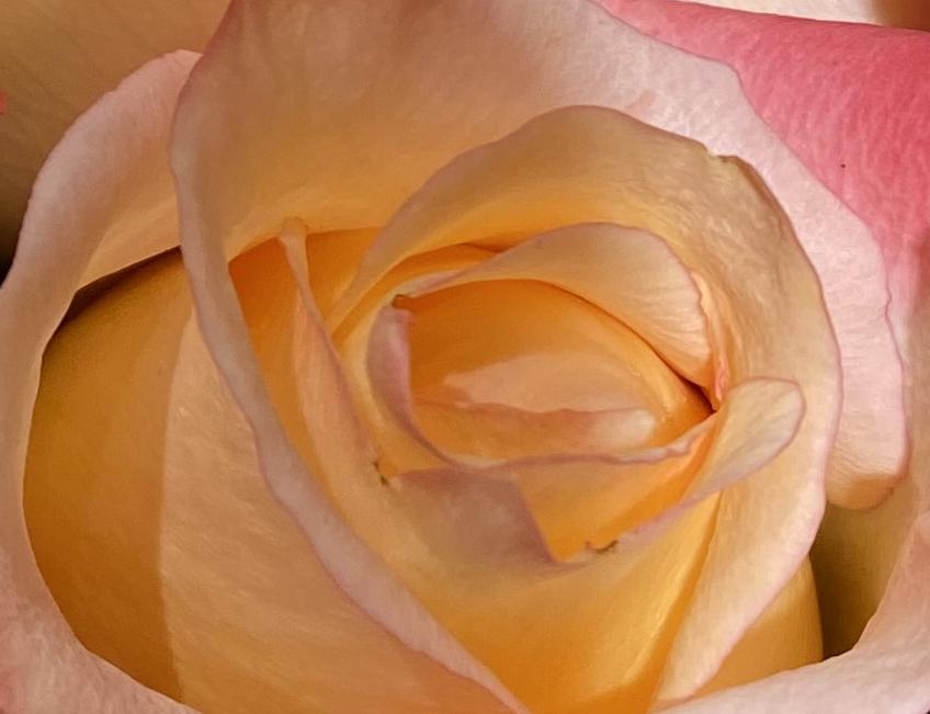 Bouquet roses 3_7_1 crop