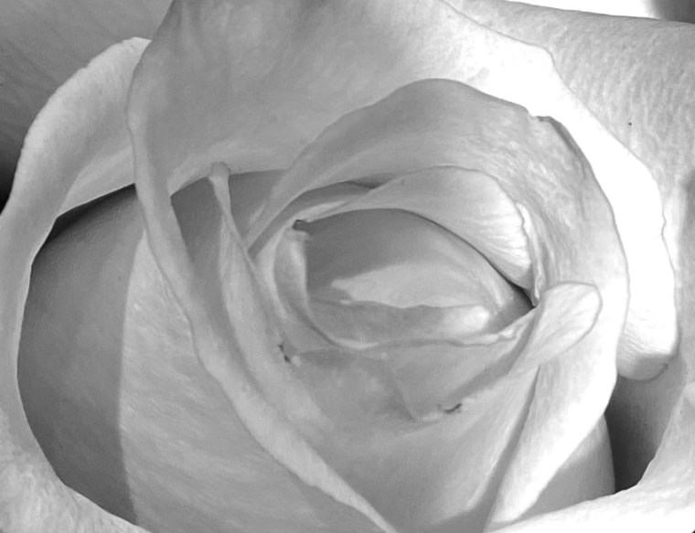Bouquet roses 3_7_1 news