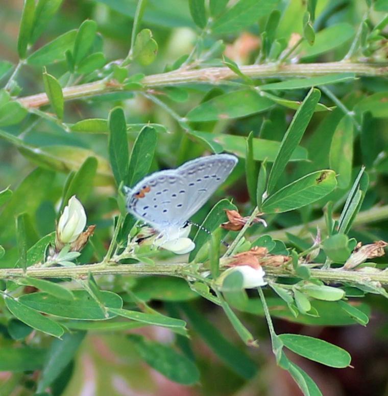 Butterfly 7