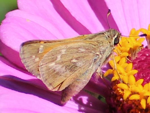 Butterfly 7 - Copy