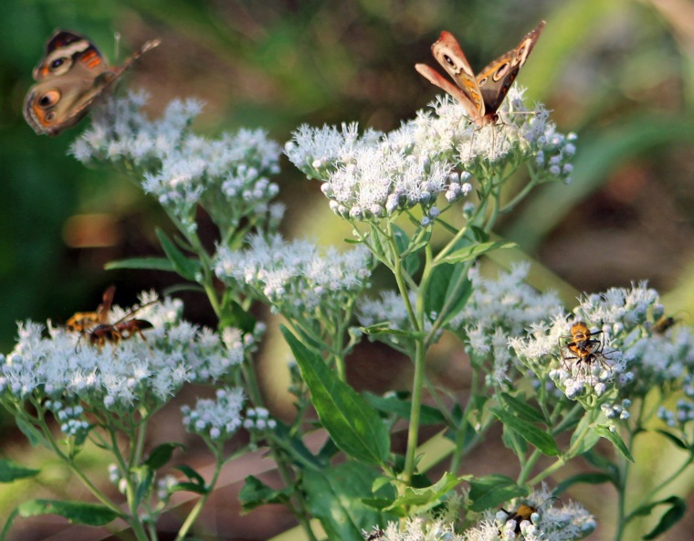 Butterfly jamboree