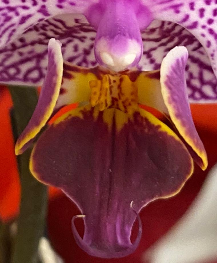 Orchid 2_28_8 crop