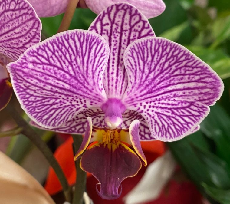 Orchid 2_28_8