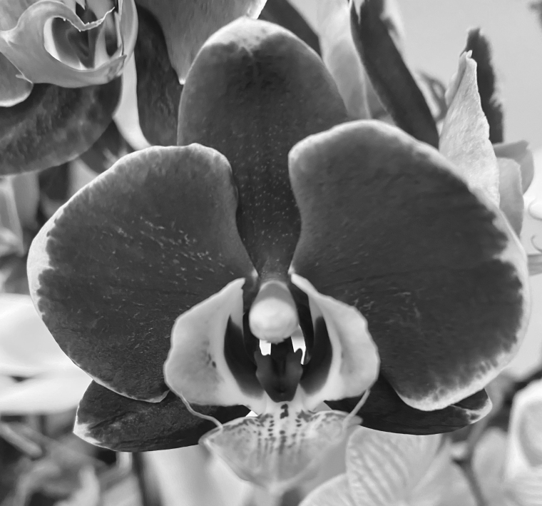 Orchid 3_28_2 bw