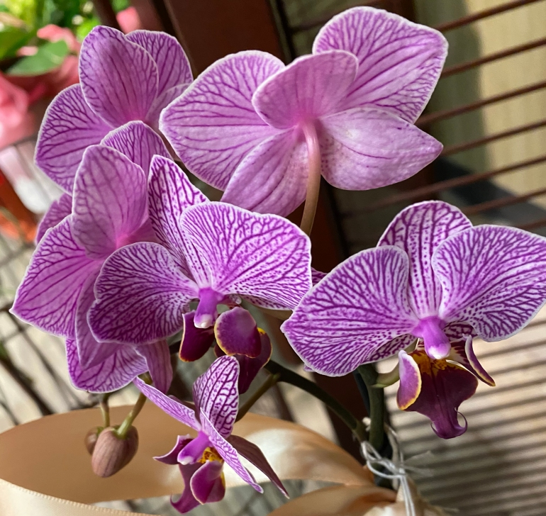 Orchid 3_2_4