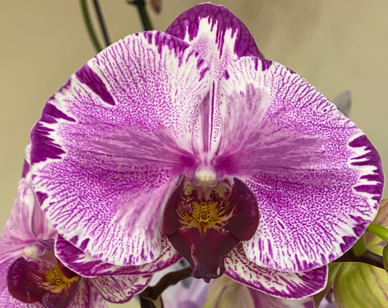 Orchid 3_2_5