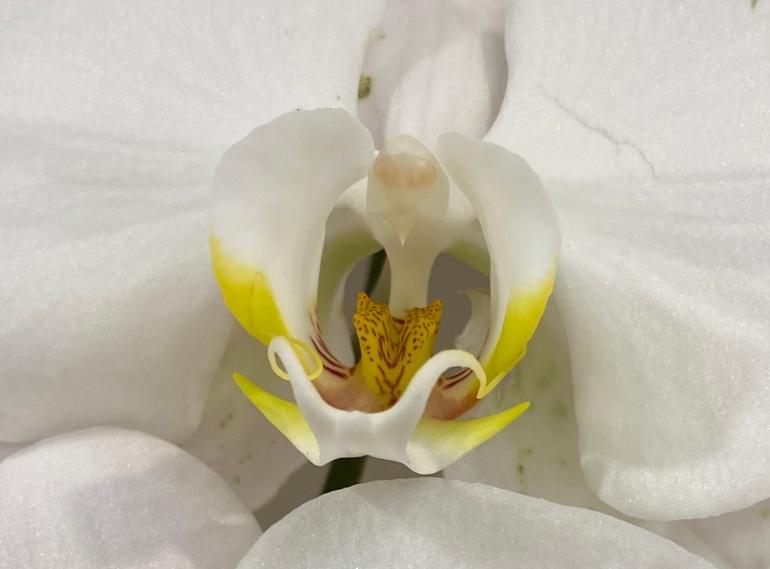 Orchid 3_6_1 crop
