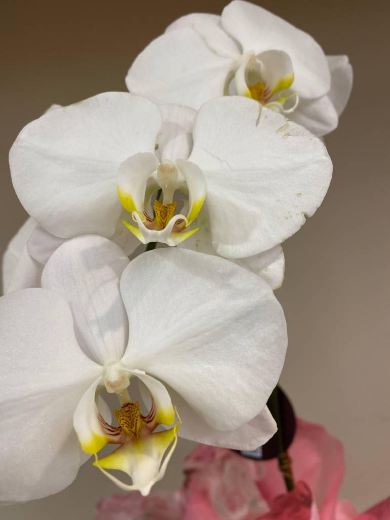 Orchid 3_6_1