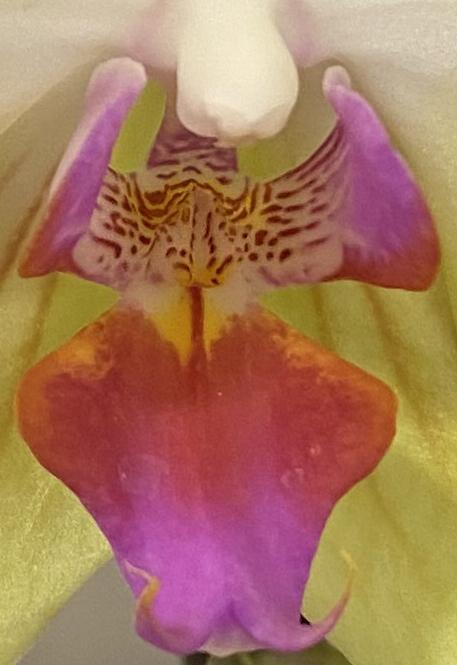 Orchid 3_9_3 crop