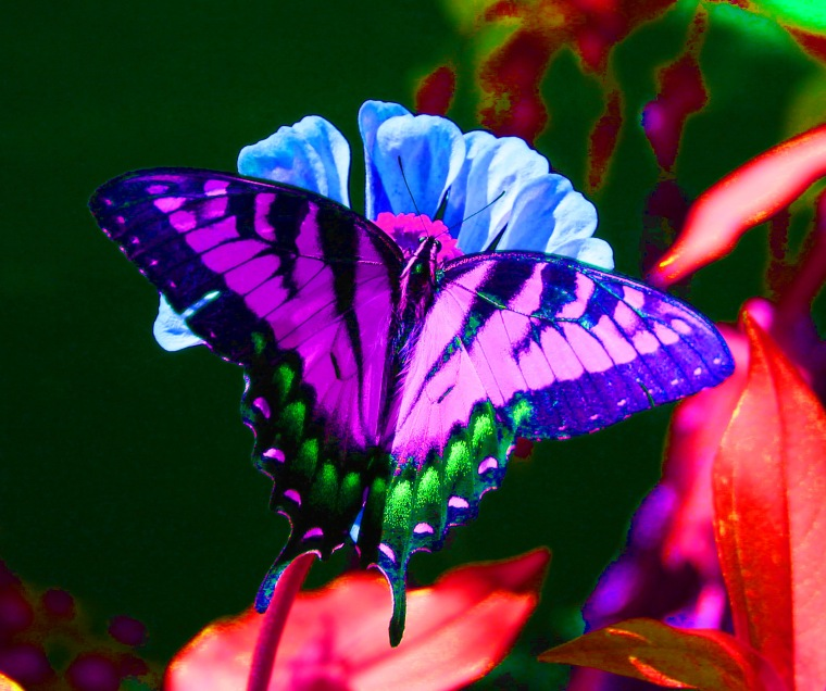 Psychedelic butterfly 3_22