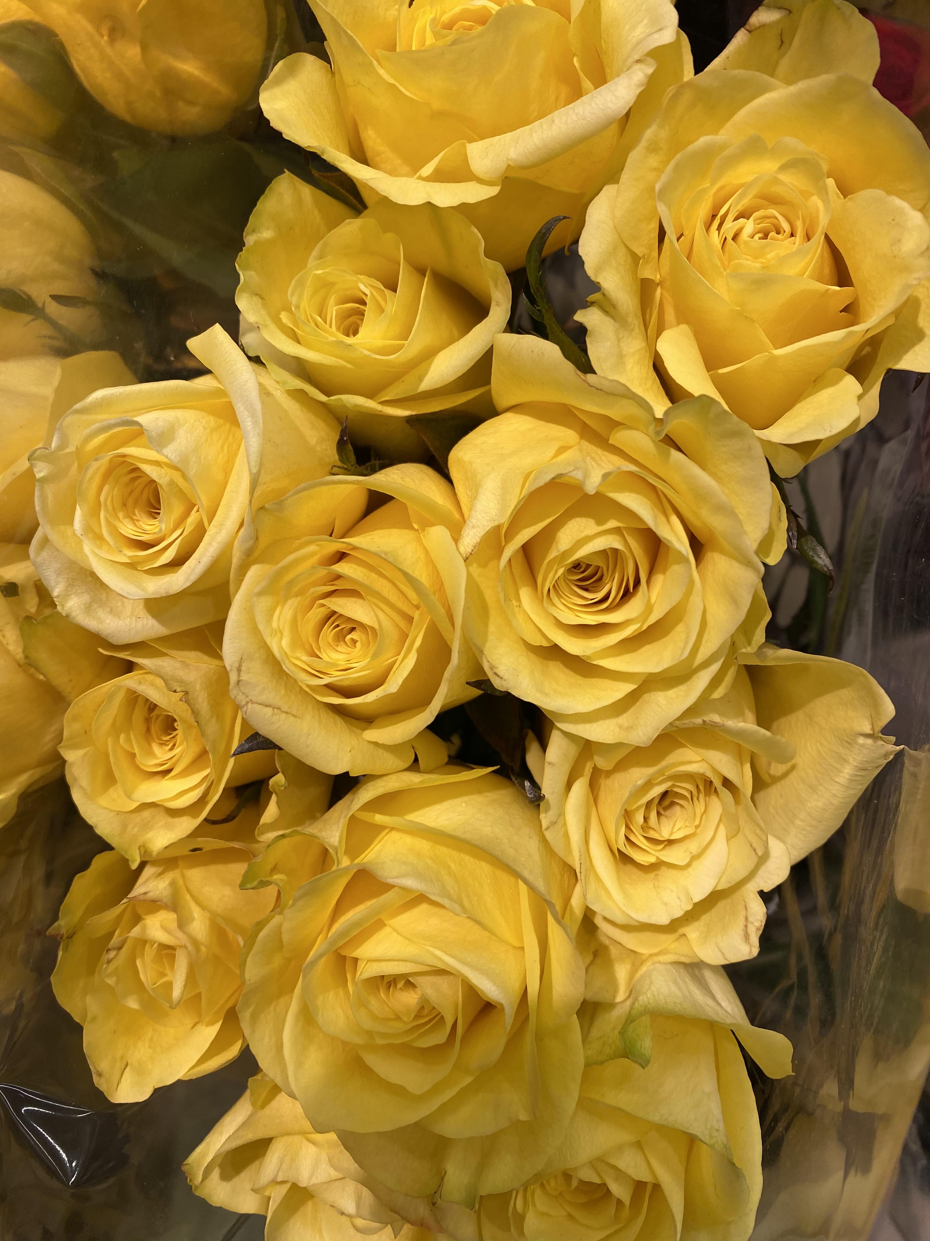 Rose yellow 3_7_1