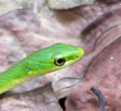Snake 4