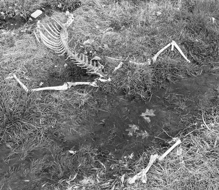Bones 1 bw