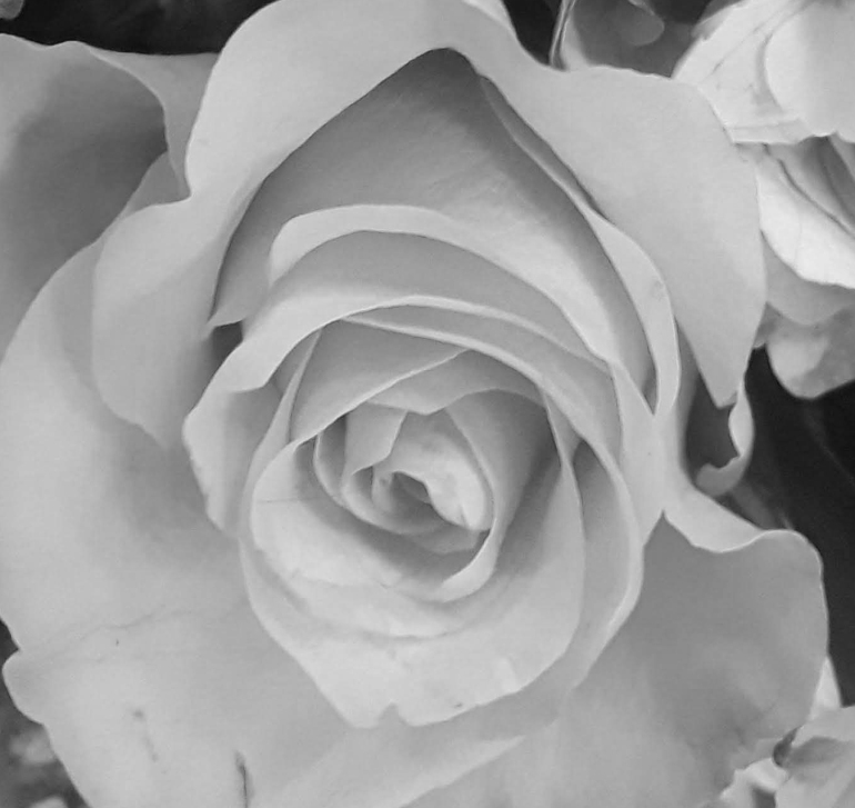Bouquet 2 crop bw