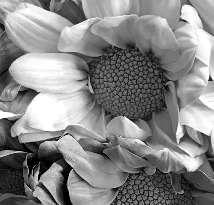 Bouquet 4_8_2 ir