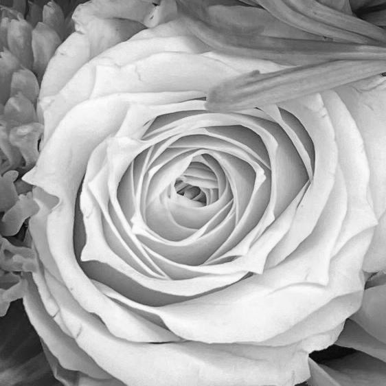 Bouquet 4_8_3 bw