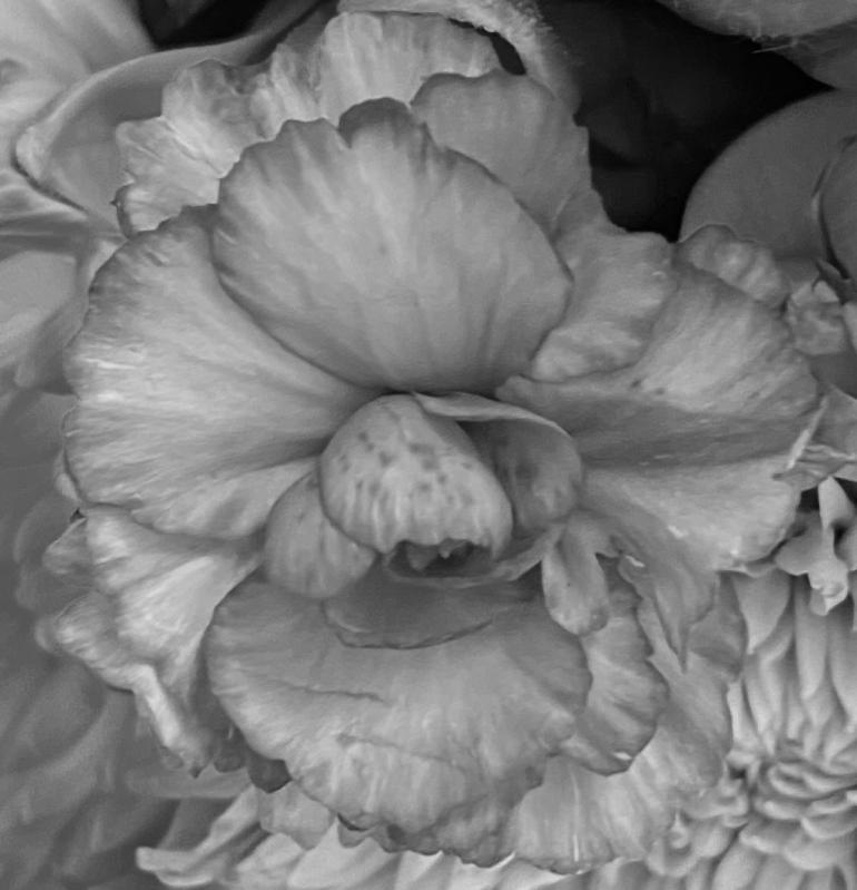 Bouquet 4_8_5 bw