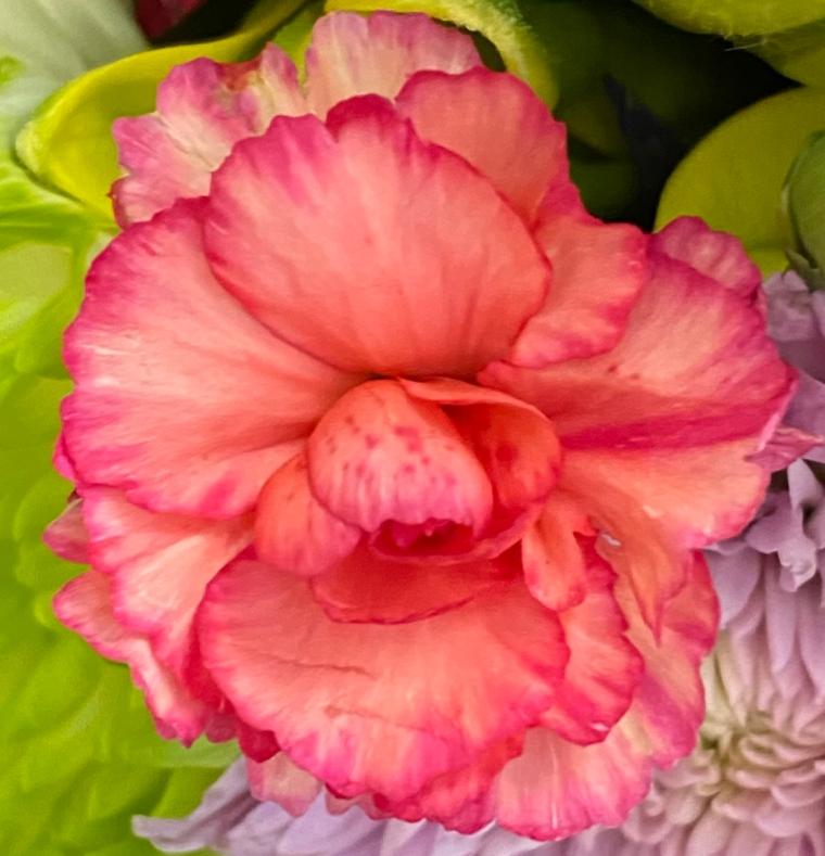 Bouquet 4_8_5 crop