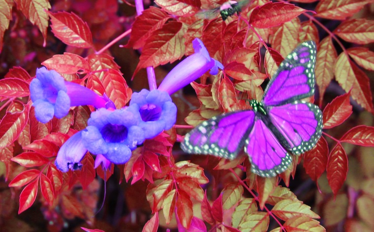 Butterfly 3 psych