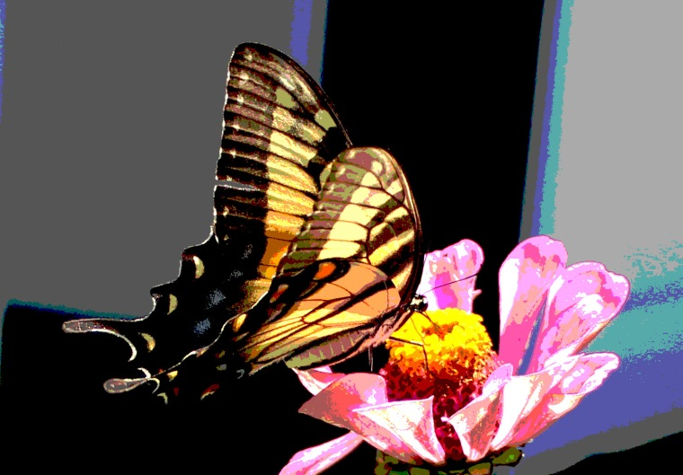 Butterfly 9 psych