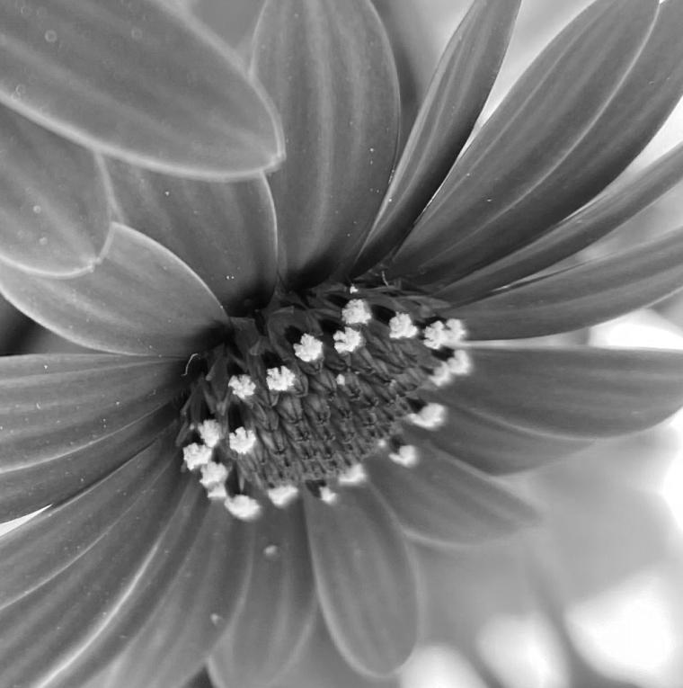 Daisy 4_8_1 vivid