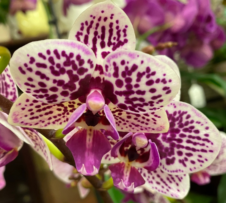 Orchid 4_28_2