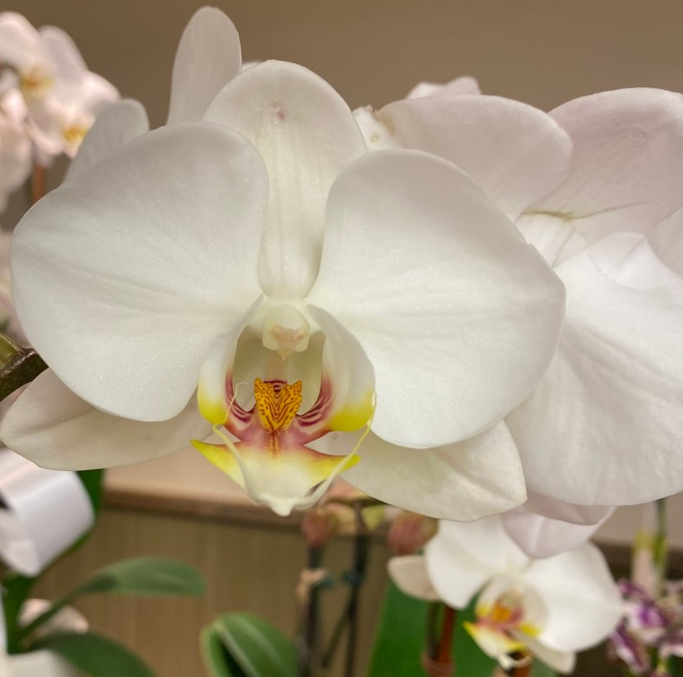 Orchid 4_3_9
