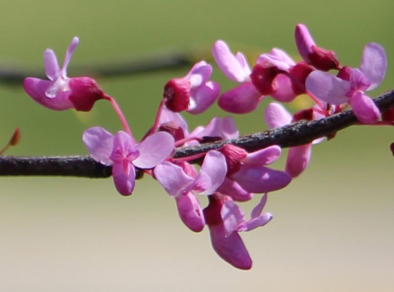 Pink Branch 2 detail