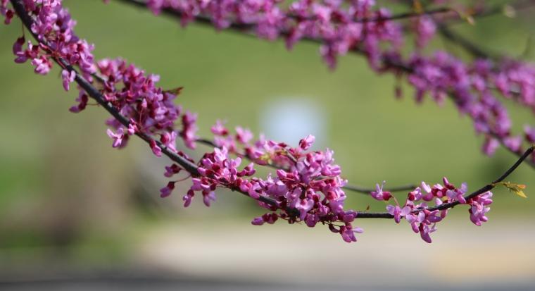 Pink Branch 2