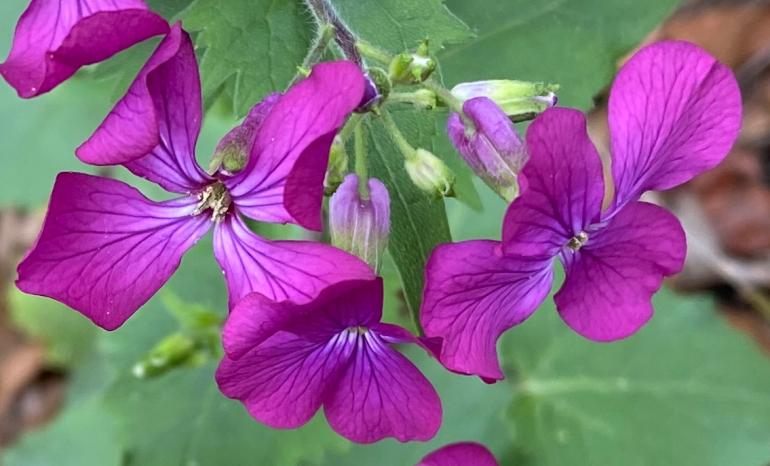 Purple 4_6_1 MACRO