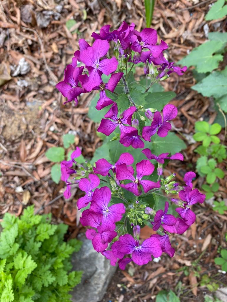 Purple 4_6_1