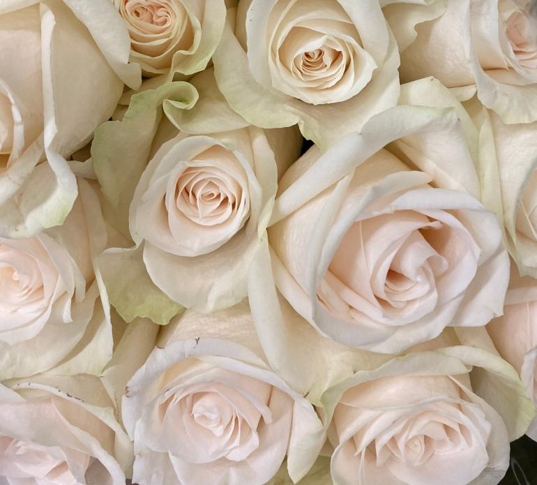 Roses 4_8_1