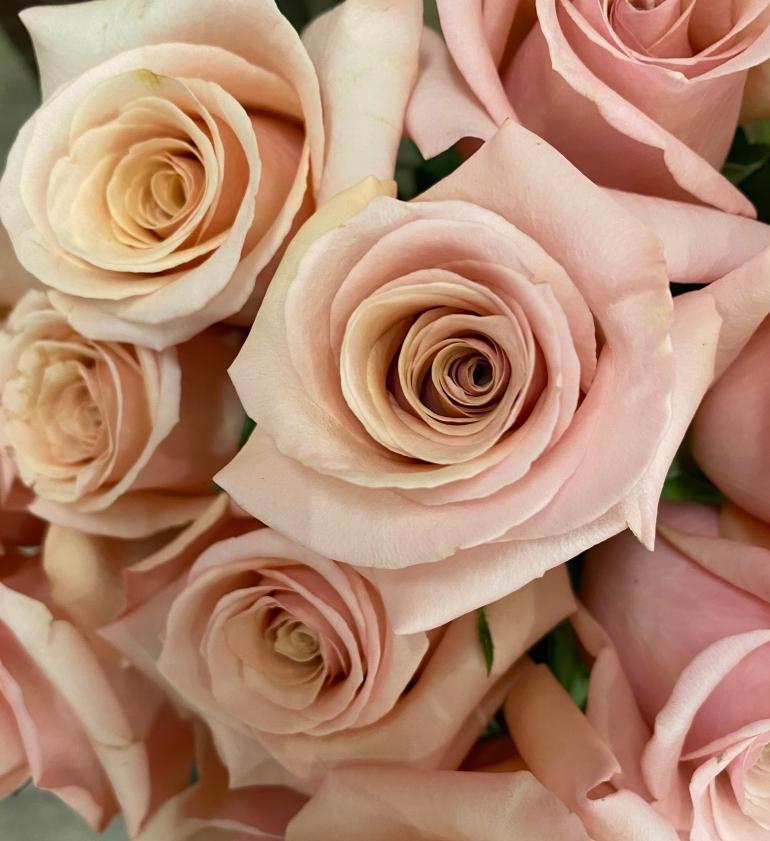 Roses 4_8_2