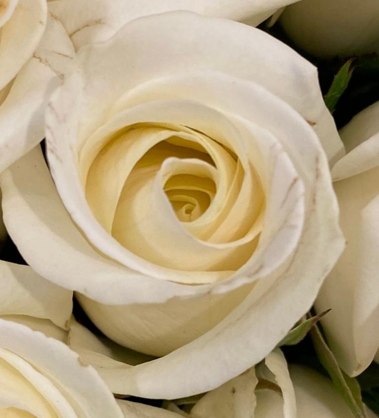 Roses 4_8_3 crop