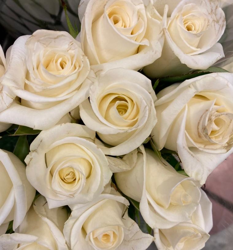 Roses 4_8_3