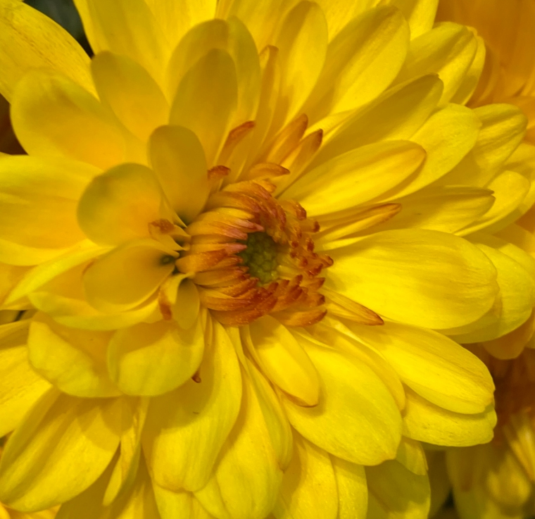 Yellow 4_8_2 crop