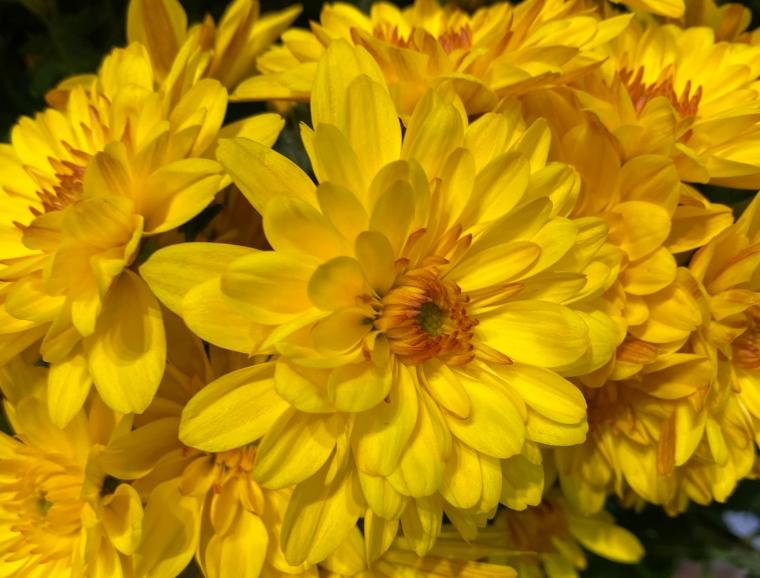 Yellow 4_8_2