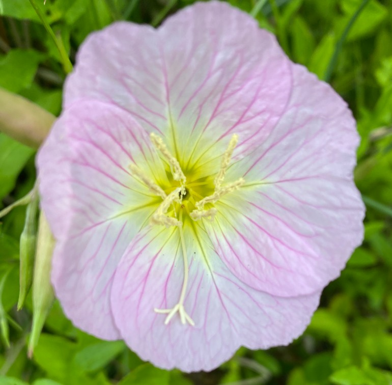 Blossom 5_21_2
