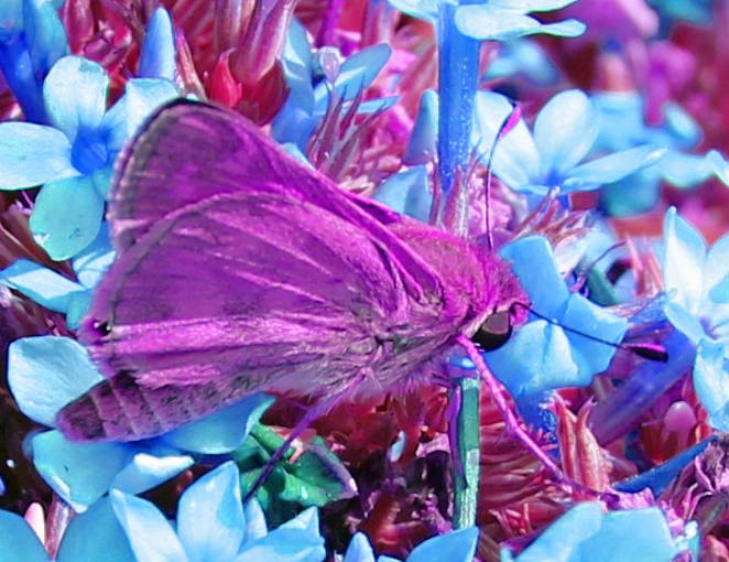Butterfly 4 psych