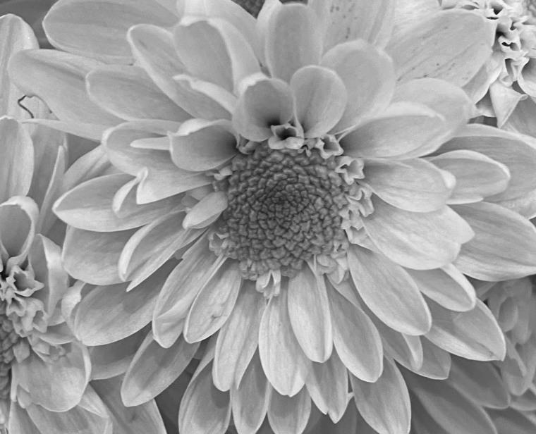 Daisy 5_20_4 bw
