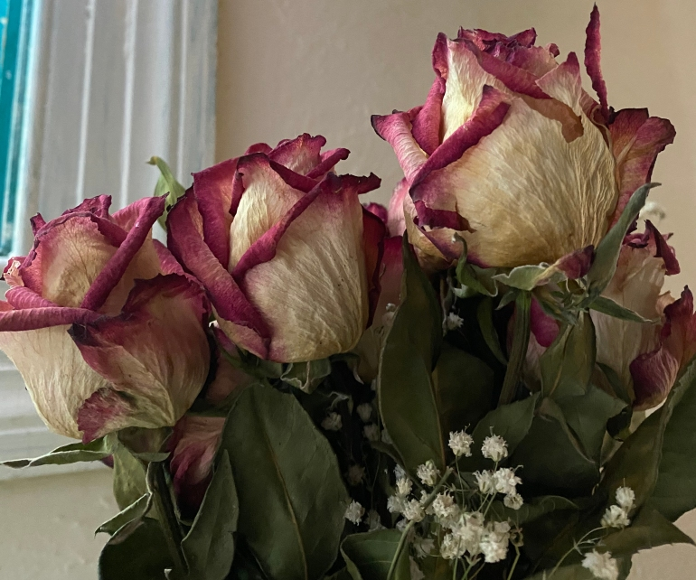 Dried roses 2