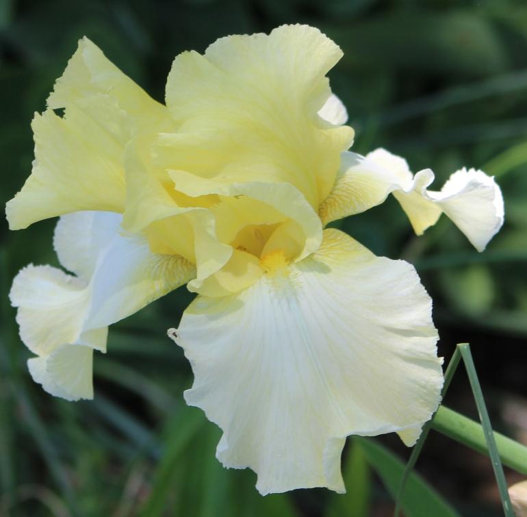 Iris 5_15_4