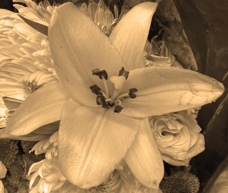 Lily 5_1_1 sepia