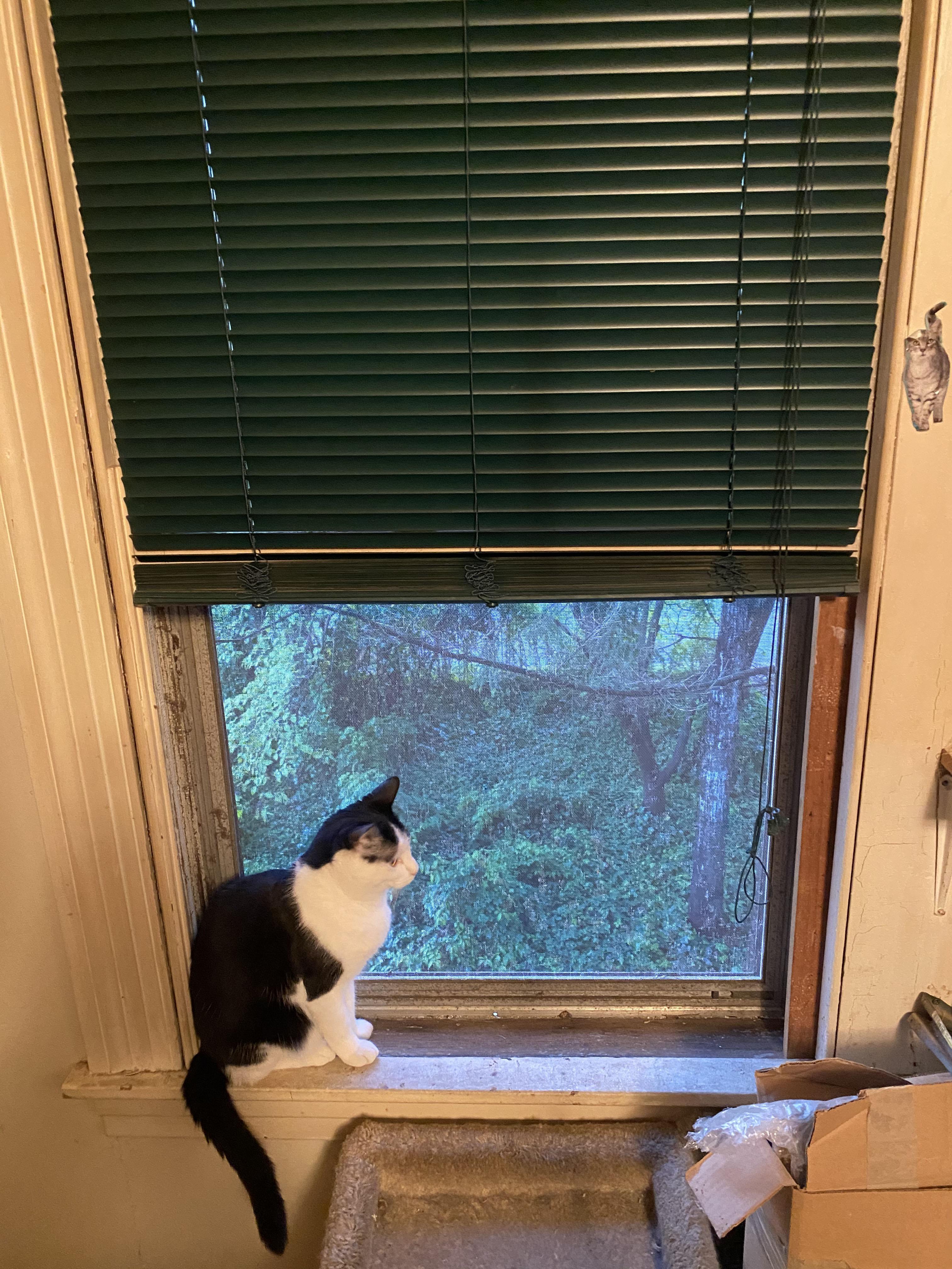 Monday Window 5_4_2