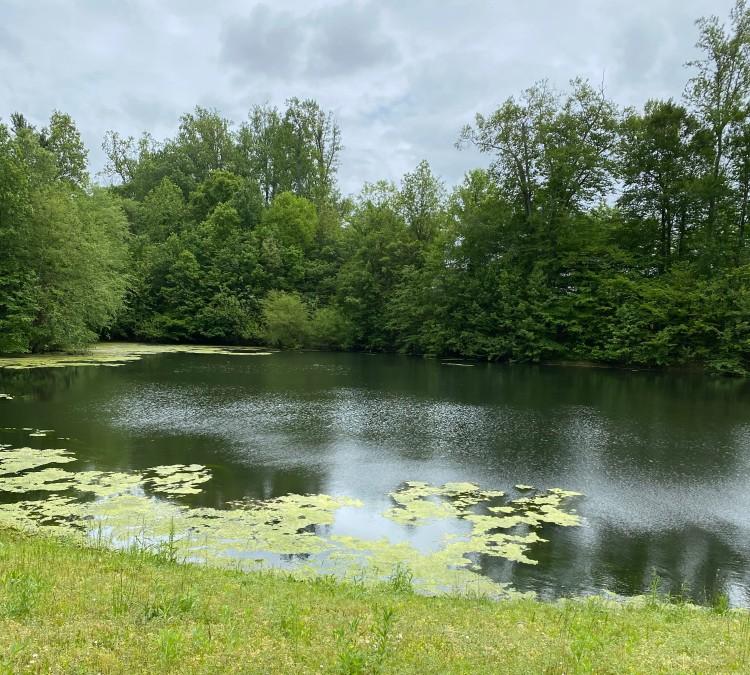 Pond 5_20_2