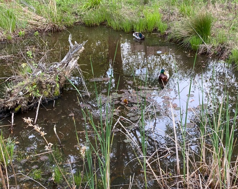 Pond 5_5_2